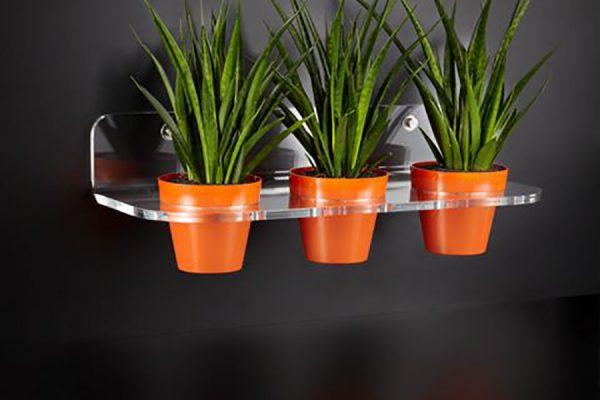 g3-piante